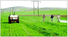 دانلود پایان نامه اقتصاد روستایی