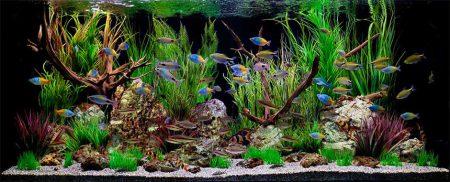 aquarium-4[1]