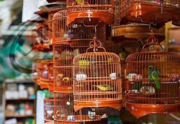 لیست پرنده فروشی های تهران